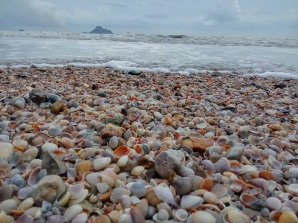 Most shell covered beach ever
